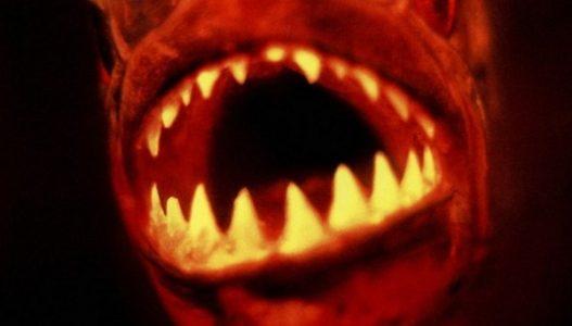 Piranha (1995) ปิรันย่า